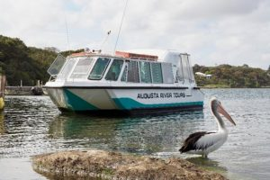 From Pelicans to the Pub