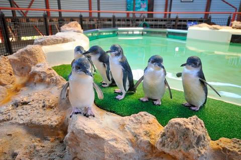 PENGUIN ISLAND TOUR