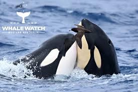 Gannaways Bremer Bay Orca Experience